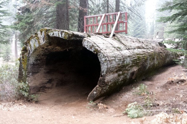balch_park_hollow_log